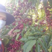 robusta-chin-do (11)